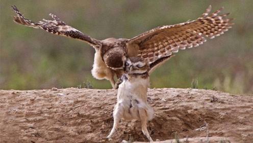 实拍老鹰喂小鹰,看得我想哭,世界上当妈的都一样!