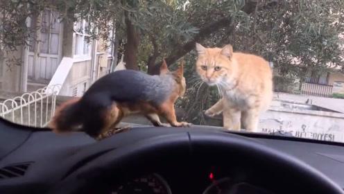 猫咪和松鼠隔窗相遇,互相看向对方,接着搞笑的一幕上演了