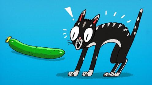猫咪为什么怕黄瓜?