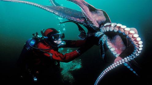 海洋中最恐怖的5种生物,无形之中让人陷入危机,看到赶紧跑!