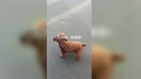 去过迪吧的狗狗