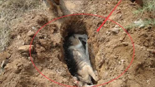 为啥狗狗死后不能埋?很多人都不信,专家研究后发现真不能埋!
