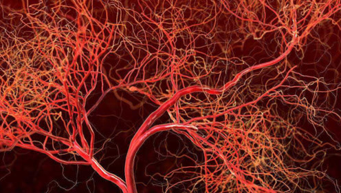 假如往人体血管内注射鸡血,后果会变成怎样?答案让人直冒冷汗!