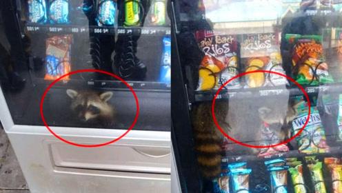 自动售货机开始卖小浣熊了?