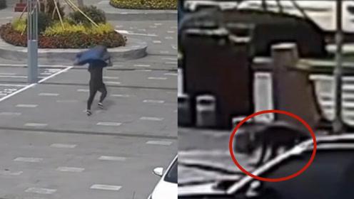 跑马民警把小偷追到跪地求饶:先收下你的膝盖,再带走你的人