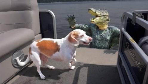 二哈也太不容易了!主人穿上鳄鱼装跳进水里吓狗,没想到害苦自己
