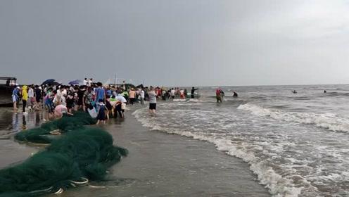 湛江开海第一天,拉大网上百人来感受气氛,一网几千斤鱼,太刺激