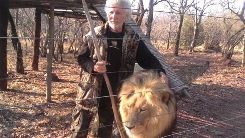 """南非老""""狮人""""修栅栏遭爱狮袭击 为救人3只狮子被杀引愤怒"""