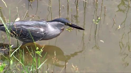 """好聪明的鸟,竟懂得用面包在河边""""钓鱼""""难道这本领是跟人学的?"""