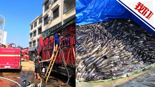 实拍:运鱼车故障9千斤鱼奄奄一息 消防员两天送20吨水救鱼