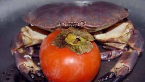 螃蟹和柿子一起吃,会长石头?这是个谣言,一次性把原因说清楚