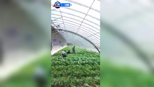 习近平甘肃行:看富民新村移民新生活