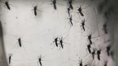"""国外一公司竟然把10亿只蚊子放出""""蚊笼"""",场面顿时失控!"""
