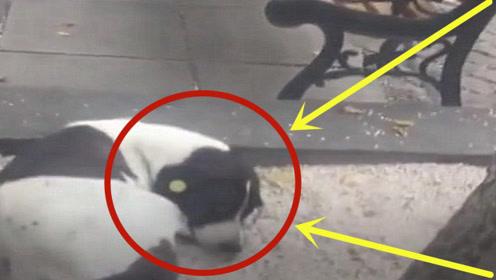 街头看到走丢3年狗狗,主人叫了它的名字,接下来泪目了!
