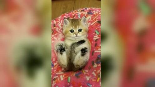 甜甜圈中的小猫咪,甜美又可爱