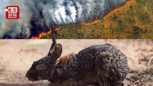 烧了3周!亚马逊雨林每分钟烧掉俩足球场 NASA在太空都看到