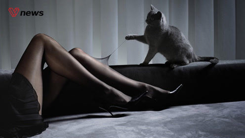 研究表明:养猫没有心理问题,但不养宠物的人不伤心