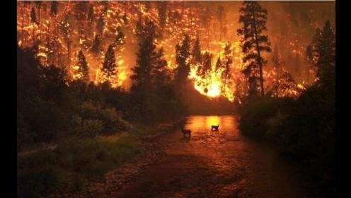 """全球变暖""""壁垒""""失守?亚马逊雨林山火失控持续燃烧18天"""