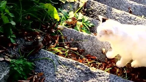 萌宠 猫咪:天下武功,唯快不破,我挠,我挠,我挠挠挠!