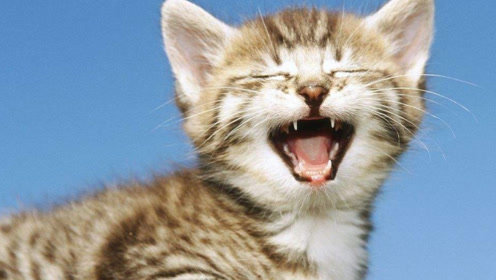喵星人突袭!可爱的小奶猫卖萌合集!主人表示架不住攻势!