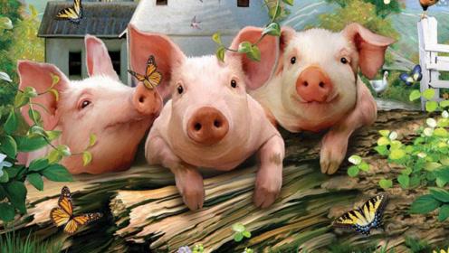 猪价涨势凶猛,国家下放20亿调停,养猪未来3年会发财,真的?