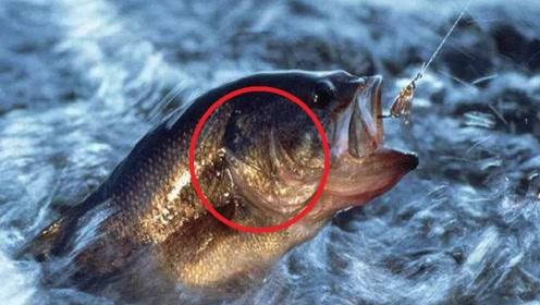 男子偶然发现一条鱼挣扎游上岸,捞起来看后,瞬间情绪失控