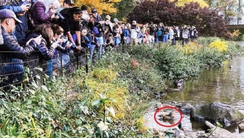 """美国公园发现一对""""中国鸟"""",上千人围观拍照,直呼:太美丽了"""
