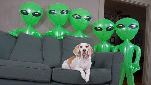 小哥用外星人围攻家里,下一秒狗狗的反应让人心头一暖!