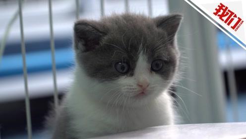 中国首例克隆猫降生 主人花20万为的是情感的寄托