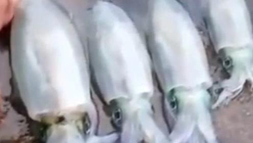 鱿鱼在死的一瞬间,被吓的脸色发白,这是为什么呢?