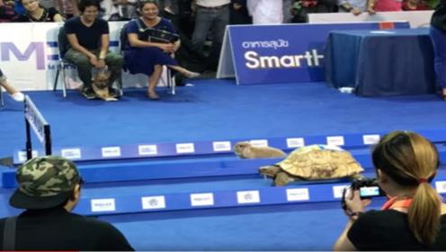 现实中的龟兔赛跑,仍是乌龟赢吗?结果你肯定想不到!