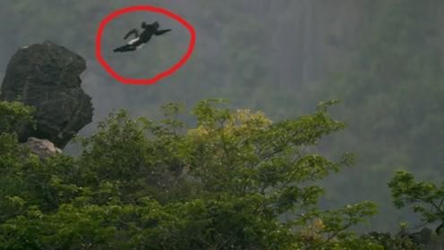 原始森林惊现满天徒手飞行的百岁老人 看清后被真相吓一跳