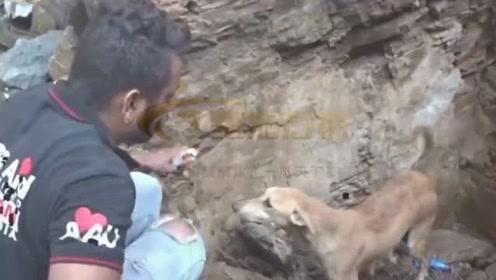 母爱伟大!幼崽被困废墟下 狗妈妈主动找人求助