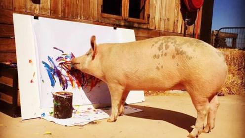 猪也会画画,竟然可以卖出8万高价,艺术天赋不一般