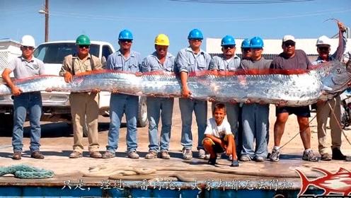 男子在浅水里发现超长怪鱼,追踪半天后它竟游上岸自杀了