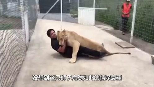 狮子十年后见到救命恩人,竟发生如此一幕,太感人了