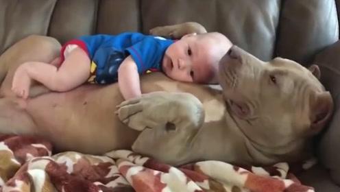 宝宝非要睡在狗肚子上,下一秒二狗的反应,让主人猝不及防