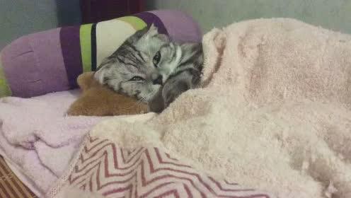 熬夜且傲娇的小猫咪,铲屎官:爱了就爱了!