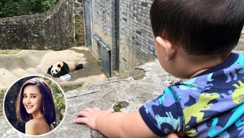 张歆艺和1岁儿子去看大熊猫 儿子看得入迷不想回家