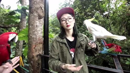 海南呀诺达景区动物明星之金刚鹦鹉、小葵花凤头鹦鹉