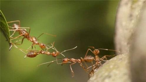 蚂蚁是如何处理同伴尸体的?看完惊叹,它们的方法竟如此神奇!
