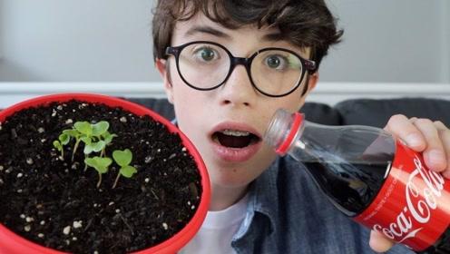 被可乐浸泡过的土壤能诱发种子吗?老外实验,网友:长的出才怪