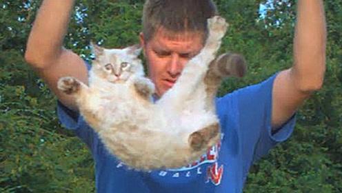 """为什么说猫""""摔不死"""",老外亲自扔猫,慢镜头记录了其中秘密!"""