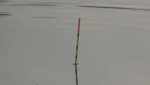 钓鱼:9月的北方,天气开始变凉,不过鲫鱼的吃口却依旧凶猛!