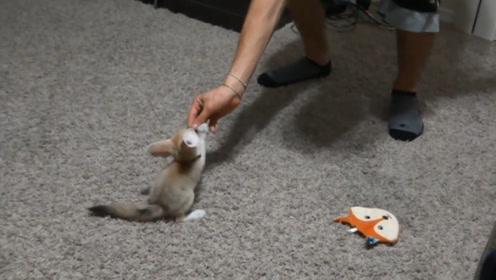 """女子野外捡到一只""""小奶猫"""",精心照料一个月后,越来越不对劲!"""