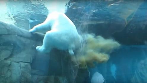 北极熊突然在水里放屁,威力实在太大!水上不断掀起波纹!