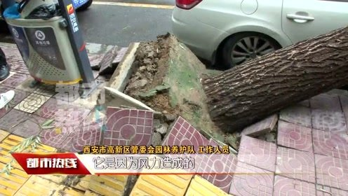 中秋假期多阴雨 风雨交加树倒砸到车