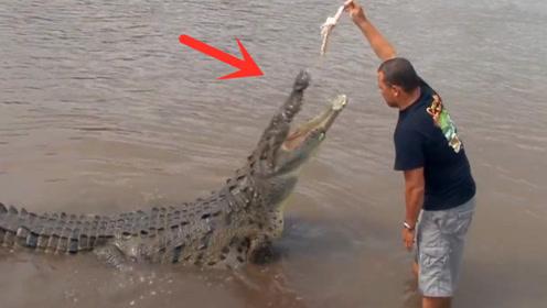 河边发现一条超级大鳄鱼,男子近距离挑衅,看得我心惊胆战!