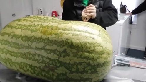 男子重金买下260斤大西瓜,切开的一刻,网友:知人知面不知心