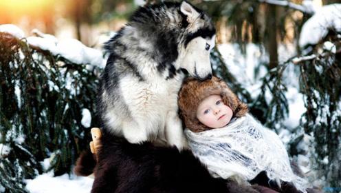 野狼捡到人类的婴儿,为什么不直接吃掉,而是选择养大呢?